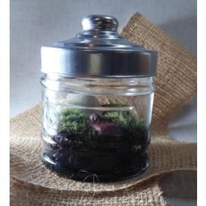 テラリウム 苔 セット ボトル 手作り 山苔と小石の森 clips-yj