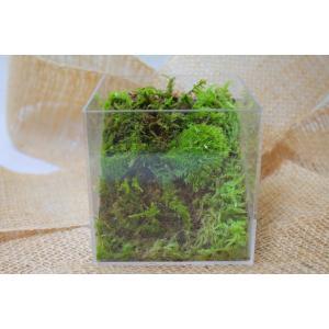 苔のテラリウム「コケリウム」キューブケース苔山の世界NO.5|clips-yj