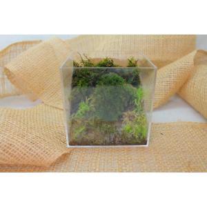 苔のテラリウム「コケリウム」キューブケース苔山の世界NO.6|clips-yj