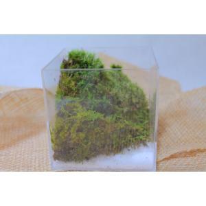 苔のテラリウム 苔と白砂で海岸沿いの山の世界【コケリウム】NO.1|clips-yj