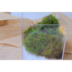 苔のテラリウム 苔と白砂で海岸沿いの山の世界【コケリウム】NO.2 clips-yj