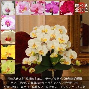 全10色から選べる・花器も選べる・光触媒ミディ胡蝶蘭 2本立   《送料無料/花のサイズ6cm/翌営業日出荷可/造花/ギフト対応》