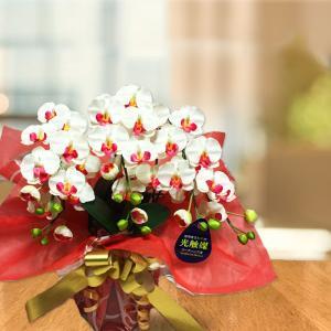 花のサイズ約6cmのミディサイズ胡蝶蘭は、テーブルにさりげなく飾れるコンパクトサイズが好評。中でもホ...