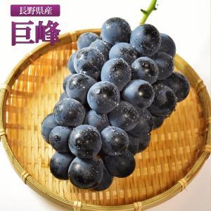 長野県産 巨峰 ぶどう 芳醇な甘み 贈答用 産地直送 ギフト 葡萄 2kg 4房入り
