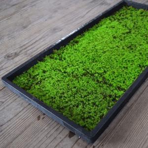 52 KOKE PROJECT(江津苔プロジェクト):スナゴケ シート (28cm×58cm) 5枚 栽培 庭園 砂苔 盆栽 苔玉 テラリウム