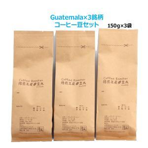 コーヒー豆 グァテマラセット  高品質 プレミアムグレード...