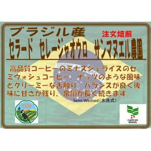 ブラジル イパネマ農園 ウォッシュド19 200g|coffeesaikoubou