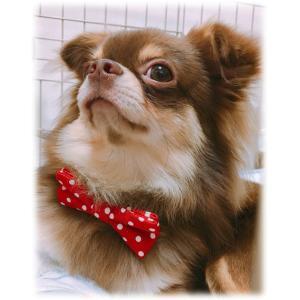 犬 アクセサリー 首輪 シュシュ 犬服にもうワンポイント|coharu|04