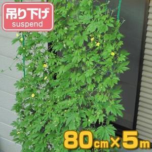 緑のカーテン 吊り下げ 幅80cm×高さ5m