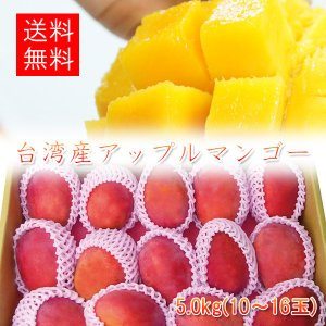 アップルマンゴー 台湾産 5.0kg(9-16玉入)【6月下旬頃発送予定】|comatsuhyakka
