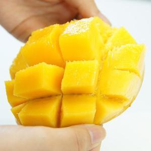 アップルマンゴー 台湾産 5.0kg(9-16玉入)【6月下旬頃発送予定】 comatsuhyakka 02