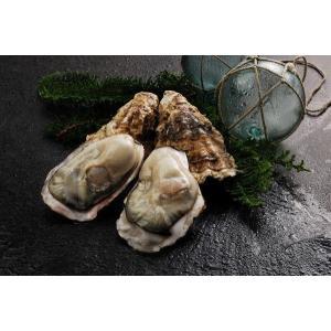 マルえもん 殻付き牡蠣 2L-size(120g〜150g未満) 15個入り  (カキムキナイフ付)|conchiglie