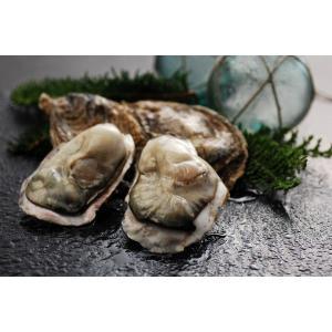 マルえもん 殻付き牡蠣 3L-size(150g以上) 15個入り (カキムキナイフ付) conchiglie
