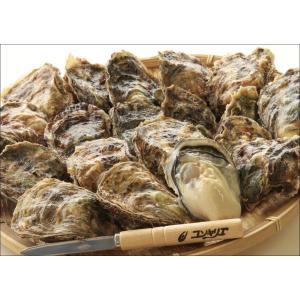 マルえもん 殻付き牡蠣2L-size(120g〜150g未満)20個入(カキムキナイフ付) conchiglie