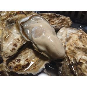 特大カキえもん 殻付き牡蠣(100g以上)15個入(カキムキナイフ) conchiglie