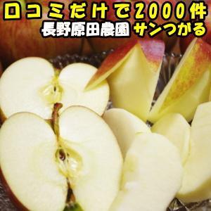 りんご 訳あり サン つがる 家庭用 口コミ2000件 糖度 噂のりんご もぎたて サンつがる 長野 原田農園 リンゴ 2.5〜3.5kg 家庭用 6〜12玉 津軽 送料無料|cooksanchoku