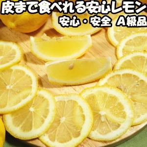 レモン 国産 安心 防腐剤 不使用 ノーワックス 2.5kg A品 皮まで食べれる 和歌山 有田さんさん リスボン レモン 2.5kg A 贈答品 ギフト プレゼント 黄色|cooksanchoku