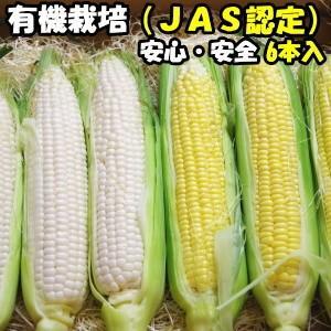 とうもろこし 無農薬 JAS認定 有機栽培 オーガニック 生でも食べれる トウモロコシ 食べ比べ 白色3本+黄色3本 合計6本 茨城産 レインボーフューチャー 送料無料|cooksanchoku