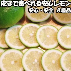 レモン 国産 ノーワックス 防腐剤不使用 5kg A品 皮まで食べれる 熊本 ひまちゃん農場 れもん|cooksanchoku