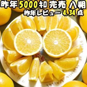 はっさく 10lg 送料無料 八朔 和歌山 10kg Lサイズ 約30〜35玉入 秀/優混合|cooksanchoku