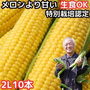 出荷中 とうもろこし 北海道 甘い メロンより甘い 安心の特別栽培 朝どれ 生で食べれる トウモロコシ 糖度18度 夢のコーン わくわくコーン 2L〜L サイズ 10本|cooksanchoku