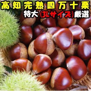 栗 生栗 送料無料 高知 西土佐産 四万十栗 約1kg 3Lサイズ 約30〜40個 大粒 なまぐり なまくり cooksanchoku