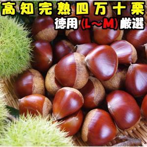 栗 生栗 送料無料 高知 西土佐産 四万十栗 約1.5kg L〜Mサイズ 約90〜100個 なまぐり なまくり cooksanchoku