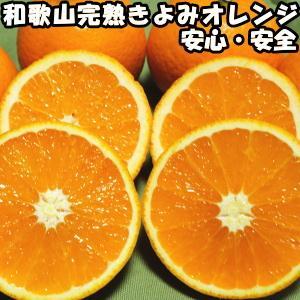 清見 きよみ 和歌山 有田 完熟 清見オレンジ 10kg 贈答用 送料無料 甘い 糖度 清見タンゴール みかん 10kg ギフト 箱 買い お取り寄せ 清美オレンジ|cooksanchoku