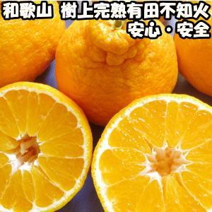 デコポン 同品種 不知火 贈答用 2.5kg 送料無料 和歌山 有田柑橘さんさん 樹上完熟 甘い でこぽん みかん 2.5kg ギフト しらぬい|cooksanchoku