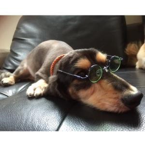 【子犬・子猫】サングラス 眼鏡 愛犬 愛猫 めがね coolbikers