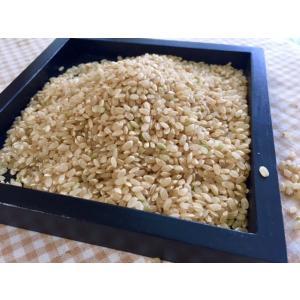 玄米10kg 石川ファーム 自然栽培米/無農薬の詳細画像1