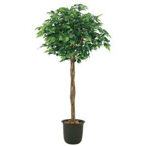 光触媒観葉樹木 ベンジャミントピアリー  高さ110cm|crescent