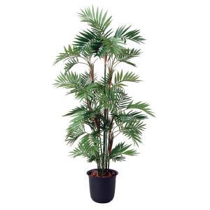 光触媒観葉樹木 パーラーパーム  高さ150cm|crescent