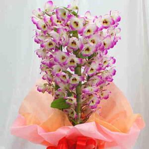 新春のデンドロビュームは、つぼみは少なくパッと咲いた花が沢山つき、色鮮やかで日持ちが良いのが特徴です...