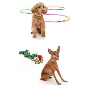 迷子札 犬 首輪 名前入りレザー製 犬首輪 犬の首輪|crystalpoint|04