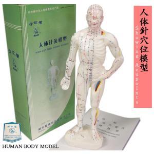 人体模型 人体針穴位模型|ctcols