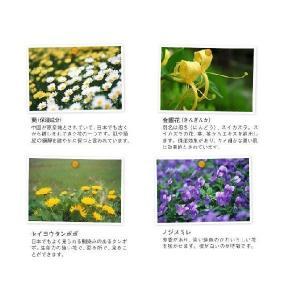 YUAN SOAP ユアンソープ 月桃(ゲットウ)スカルプシャンプー 250ml (阿原 洗頭水 無添加 ノンシリコン)|cufflink|02