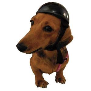 【DAMMTRAX】ANIMAL HELME アニマルヘルメット ペット 犬 猫 dog cat pet pets animals イヌ ネコ いぬ ねこ ダムトラックス|cycle-world