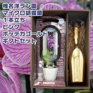 花 プレゼント ギフト マイクロ胡蝶蘭 ピンク 1本立ち ボッテガ ゴールド スパークリングワイン 750ml ギフトセット シャンパン ワイン|d-craft