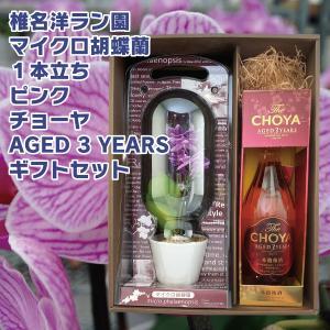 花 プレゼント ギフト マイクロ胡蝶蘭 ピンク 1本立ち CHOYA AGED 3 YEARS 720ml ギフトセット 梅酒 チョーヤ|d-craft
