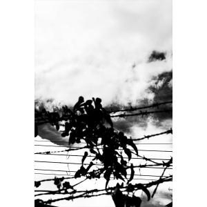 映画『光』 永瀬正敏写真展 商品 V (永瀬正敏さん直筆サイン入り)|d-tsutayabooks