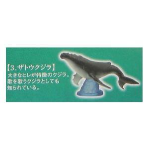 地球生命紀行 マグロ&広大な海に棲む生き物 ザトウクジラ エポック社 ガチャポン ガシャポン チョコエッグ デスクトップ フィギュア|daidara2007