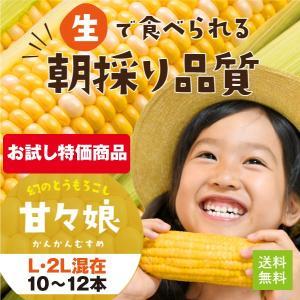 はじける甘さ!採り立て鮮度そのまんま!大人気の静岡県産とうもろこし、甘々娘。 収穫後すぐに鮮度保持フ...