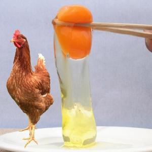 醍醐卵 Lサイズ30個入り コクと旨みが違います。【たまご,玉子】