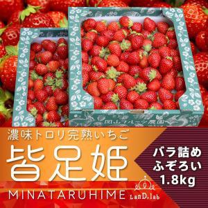 バラ詰め 2箱(1.8kg)完熟いちご皆足姫【ふぞろいだけど濃厚トロリ】 daiki-foods
