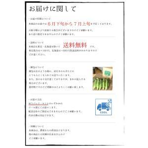 ゴールドラッシュ とうもろこし 熊本県産 約4kg 10〜13本 スイートコーン 朝採れ 新鮮 トウモロコシ 産地直送 お取り寄せ ギフト 御中元|daikichimiso|11