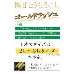 ゴールドラッシュ とうもろこし 熊本県産 約4kg 10〜13本 スイートコーン 朝採れ 新鮮 トウモロコシ 産地直送 お取り寄せ ギフト 御中元|daikichimiso|03