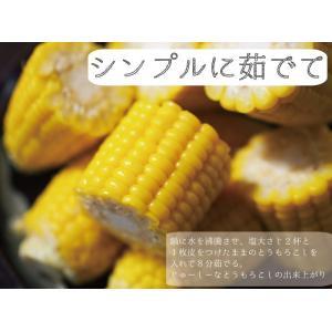 ゴールドラッシュ とうもろこし 熊本県産 約4kg 10〜13本 スイートコーン 朝採れ 新鮮 トウモロコシ 産地直送 お取り寄せ ギフト 御中元|daikichimiso|04