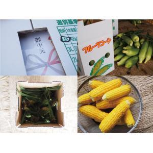 ゴールドラッシュ とうもろこし 熊本県産 約4kg 10〜13本 スイートコーン 朝採れ 新鮮 トウモロコシ 産地直送 お取り寄せ ギフト 御中元|daikichimiso|10
