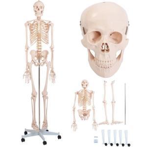 等身大人骨模型180cm ガイコツ 骸骨 人体模型 JK-3007Y